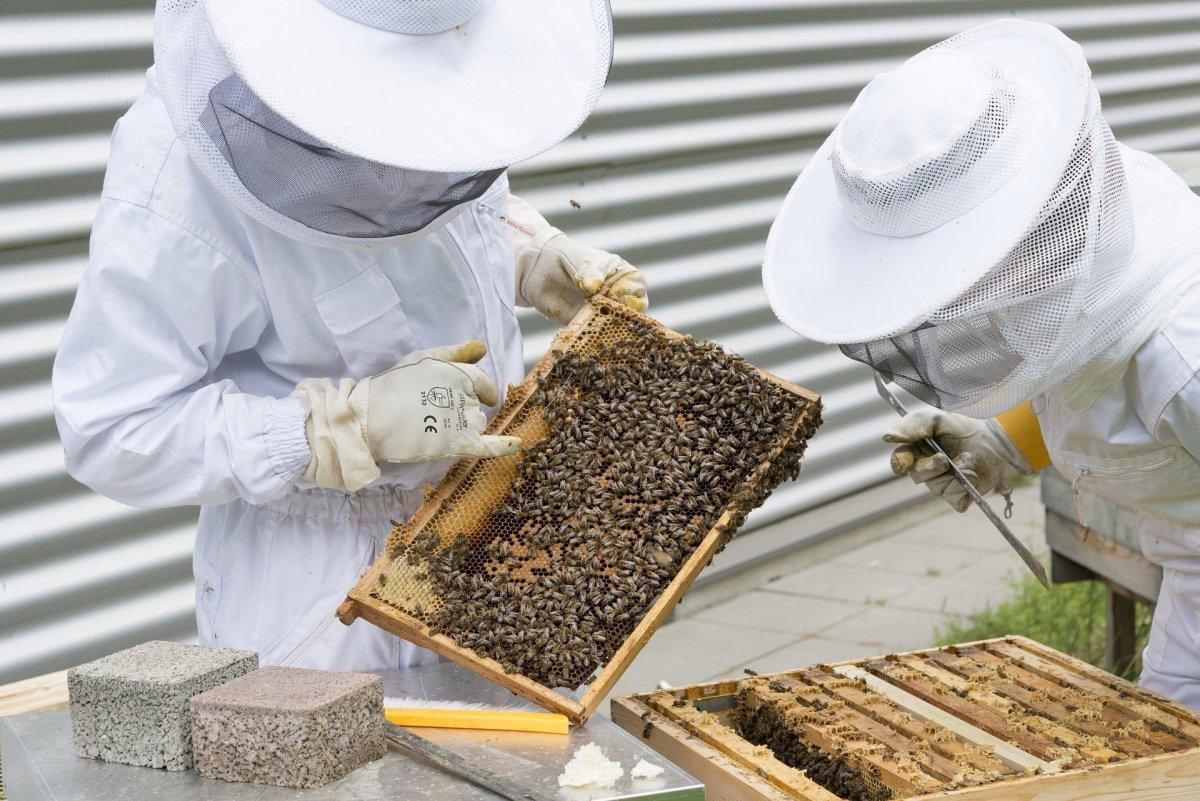 Honey powder preparation method