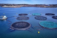 EnzoMeal™ - A Sustainable Food Source for Farm-Raised Fish