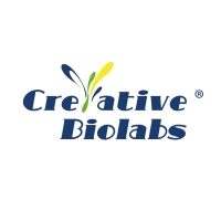 Creative Biolabs offers stable cell line services