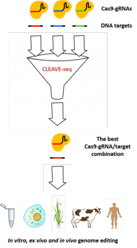 CLEAVE-seq: technology for determination of on- and off-target sites for DNA endonucleases