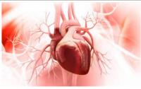 Regenerative medicine for drug screening