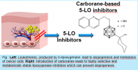 Stable inhibitors of the 5-lipoxygenase pathway for treating Asthma and Cancer