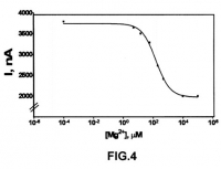 Development and method of construction of a new electrochemical sensor of Magnesium (Mg2 +), without the need to add organic salts, additives or organic solvents to the sample