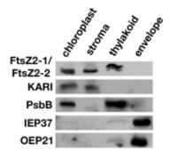 Polyclonal Antibody Serum Preparation