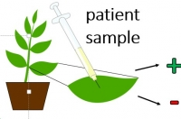Plant-based Diagnostic Kit to Detect Sick and Recovered SARS-CoV-2 Virus Patients